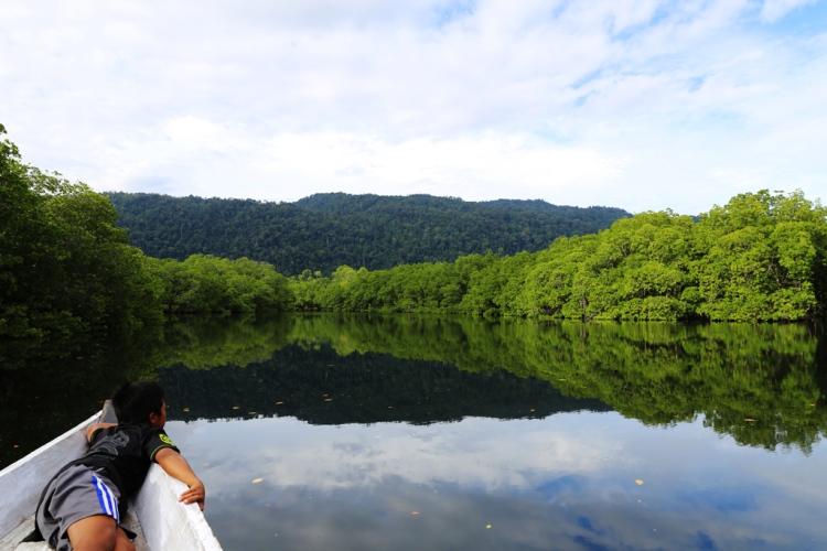 Amazing view at mangrove