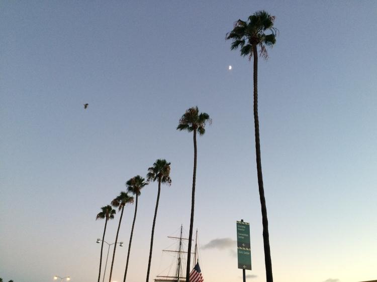 Palm trees along coastline, typical California landscape