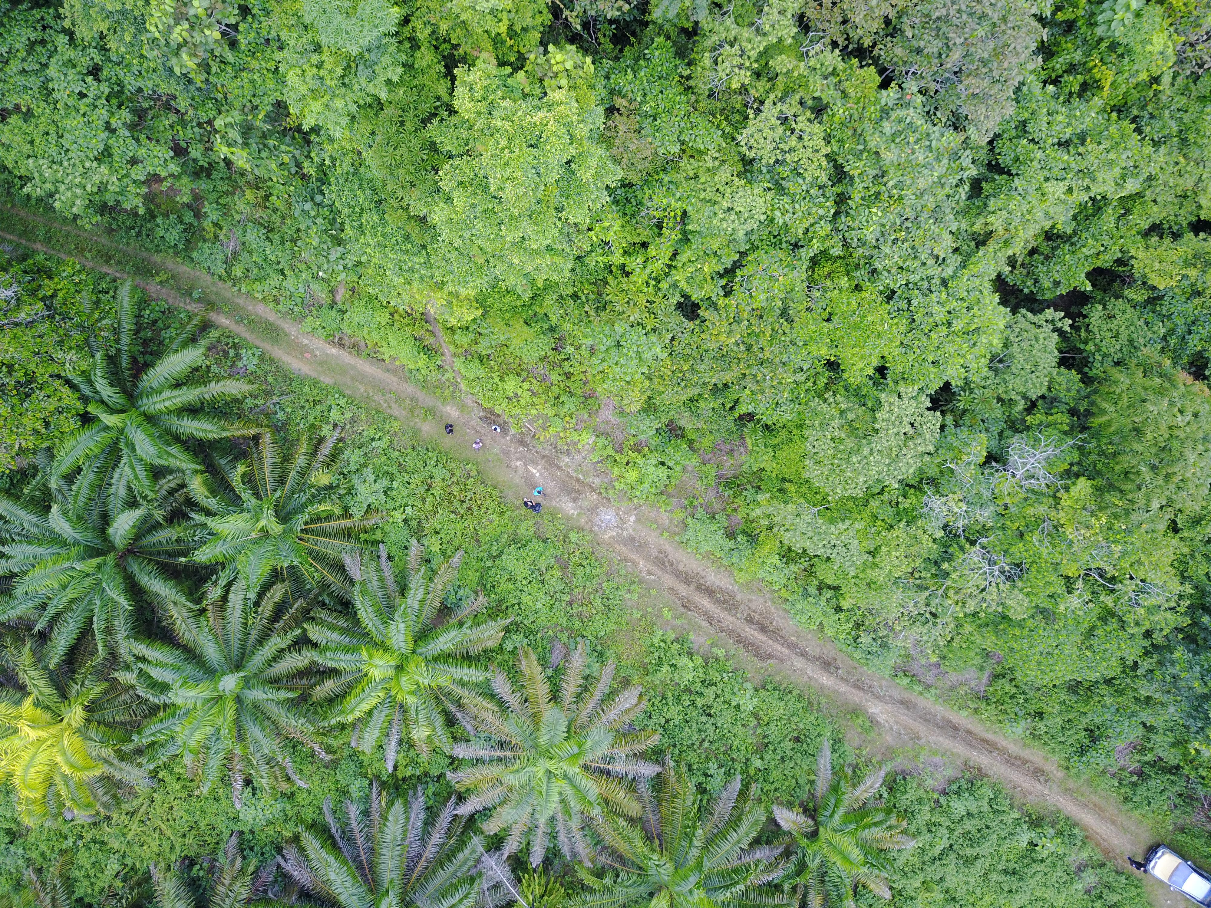 Perencanaan Perkebunan Berkelanjutan Berbasis Yuridiksi: Apa Mungkin Berkelanjutan?